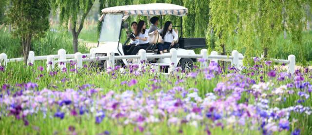 19일 거창군 남상면 거창창포원에서 관광객들이 창포 꽃길 사이를 전동 카트를 타고 지나가고 있다./거창군/