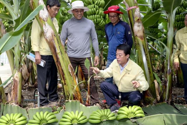 문준희 합천군수가 용주면 바나나농장을 방문해 농업인들과 대화를 나누고 있다./합천군/