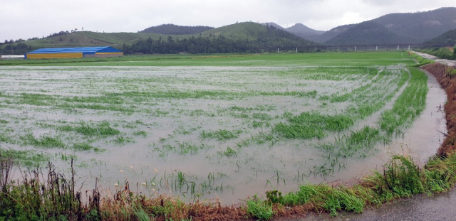 20일 전남 해남군 현산면 농경지가 제5호 태풍 다나스(DANAS)가 뿌린 비로 잠겨 있다. 연합뉴스