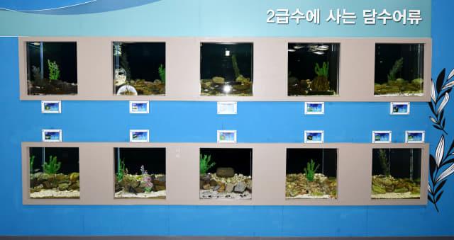2급수에 사는 담수어류들.