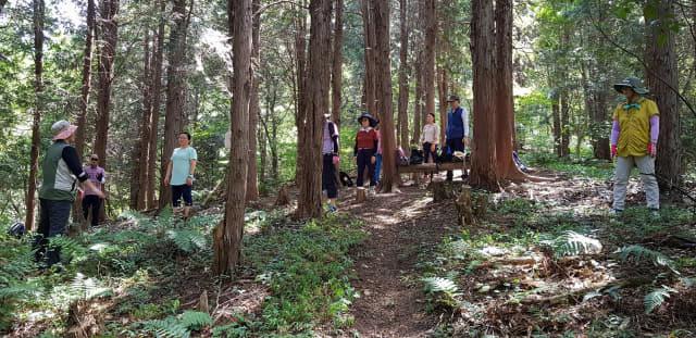 장복산 편백나무 숲을 찾은 사람들이 산림욕을 즐기고 있다./창원시/