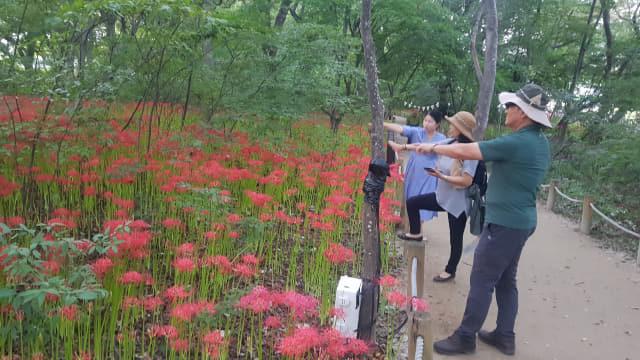 상림숲을 찾은 김옥곤(59·진주시)씨가 꽃무릇을 가르키고 있다.