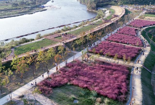 악양생태공원의 핑크뮬리
