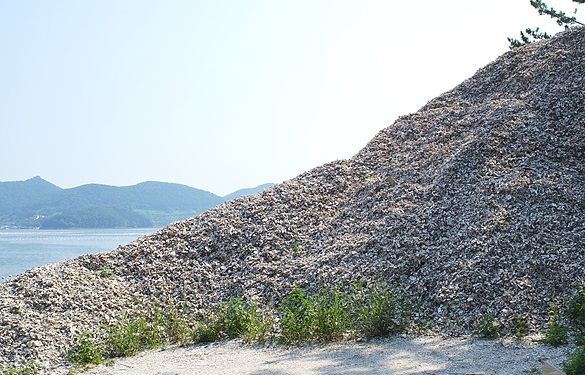통영의 한 해안가에 처리되지 않은 굴껍데기가 산을 이루고 있다. /김성호/