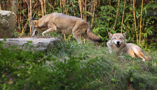 생태동물원의 면모를 갖춘 전주동물원의 '늑대사'.