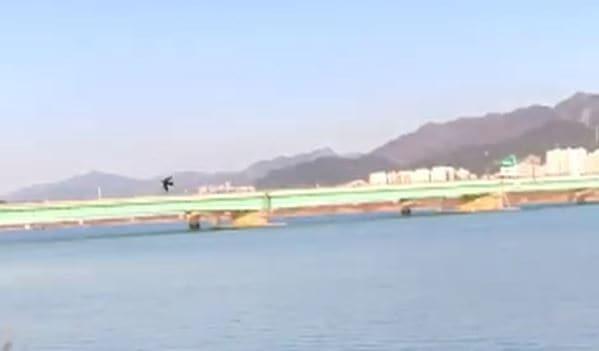지난 12일 낙동강 하구 염막둔치 인근에 나타난 제비./습지와새들의친구 제공 영상 캡처/