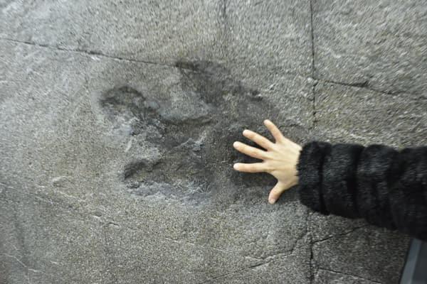 사람 손과 비교한 공룡 발자국.
