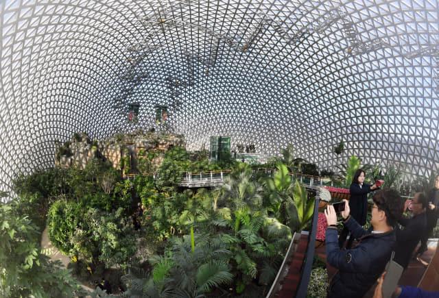 16일 오후 거제시 거제면 농업기술개발원 내 국내 최대 규모의 돔형 유리온실인 '거제 정글돔'이 문을 열었다. 시민들이 정글 전망대에서 사진을 찍고 있다. 다양한 야자나무, 바오밥나무 등 300여종 2만주에 달하는 열대식물을 감상할 수 있다./김승권 기자/