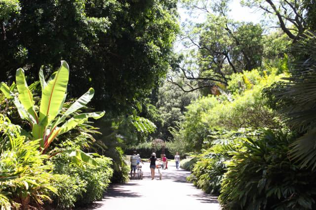 애들레이드 보타닉가든의 신전 같은 실내정원(위)과 청량한 숲길.