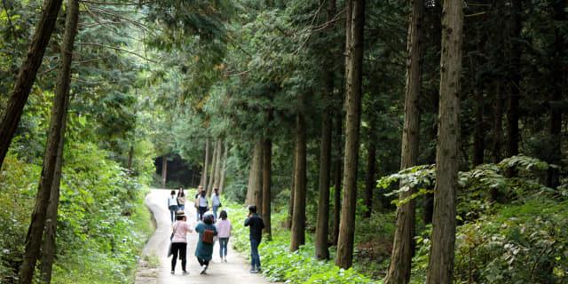 숲길과 산책로를 내달 우선 개장하는 하동 옥종 편백 자연휴양림. 3개 코스 5.9㎞ 구간으로 개장되는 자연휴양림은 편백나무 목계단, 우드칩, 흙길, 벤치·평상 등 휴식공간으로 조성된다./하동군/