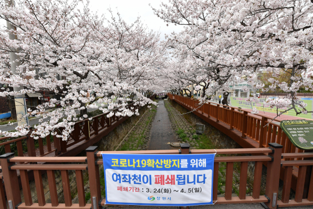 29일 벚꽃 명소인 창원시 진해구 여좌천 일대가 폐쇄돼 한산하다./전강용 기자/