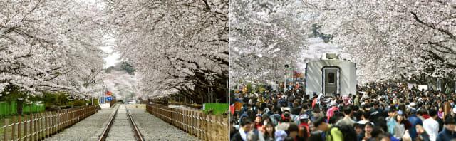 지난해 진해군항제 개막일 3월 31일 창원시 진해구 경화역 공원 일대 벚꽃 인파(왼쪽)와 지난 주말인 28일 같은 장소의 모습. 올해는 코로나19로 대부분의 진해 벚꽃명소가 폐쇄됐다./전강용 기자/