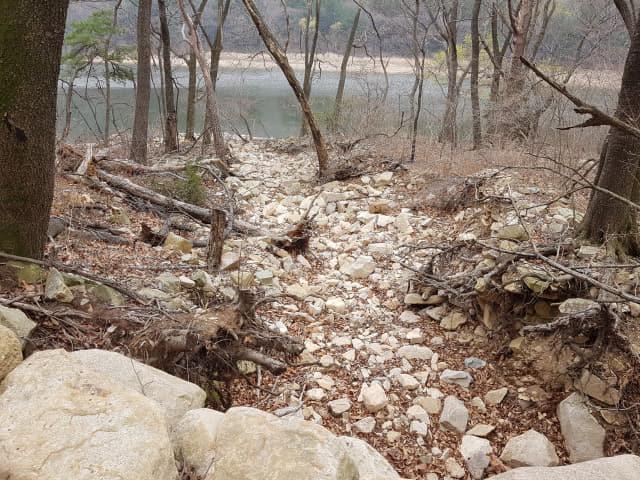 양산 법기수원지 미개방지역에 나무들이 쓰러진 채 방치돼 있다./최선호 양산시의원/