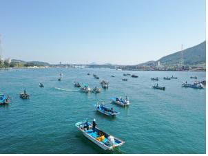 통영과 거제 사이의 좁은 해역인 견내량에서 어민들이 트릿대 방식으로 돌미역을 채취하는 모습./해양수산부/