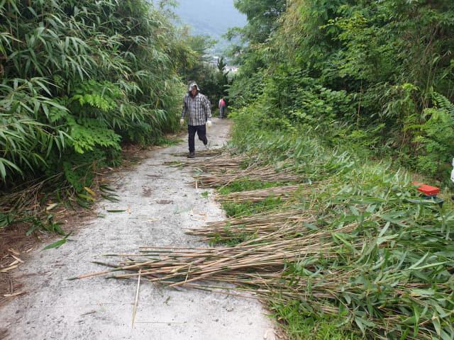 판다에게 공급한 하동산 대나무. 하동군산림조합