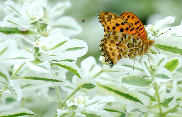 15일 창원 주남저수지 일대에 핀 꽃에 앉은 나비 한 마리가 꿀을 따고 있다./성승건 기자/