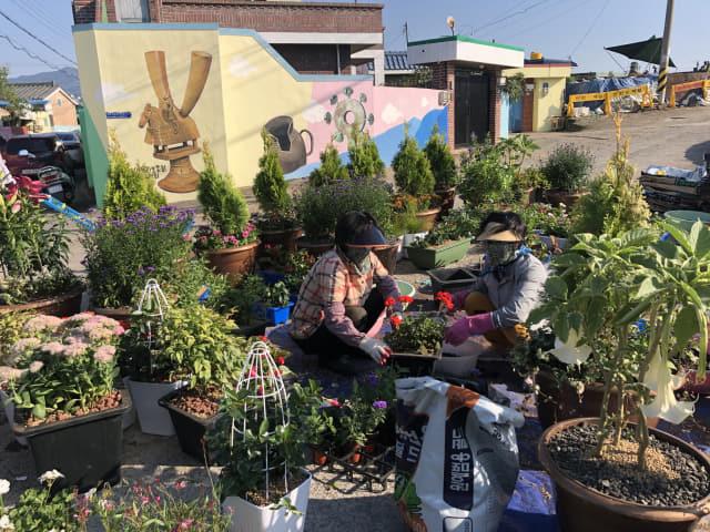 21일 고성읍 무학마을 주민들이 120m 마을골목을 장식할 꽃과 나무를 화분에 옮겨 심고 있다./고성군/