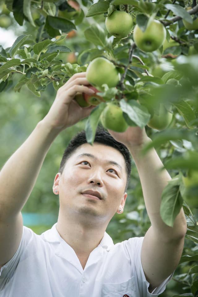 민천홍 '거창한 파머스' 이사가 과수를 점검하고 있다.