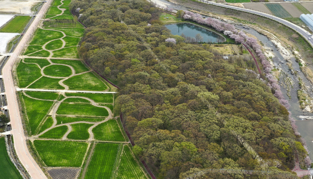 1일 함양군 상림공원에 만개한 하얀 벚꽃과 초록의 청보리가 완연한 봄을 알리고 있다./함양군/