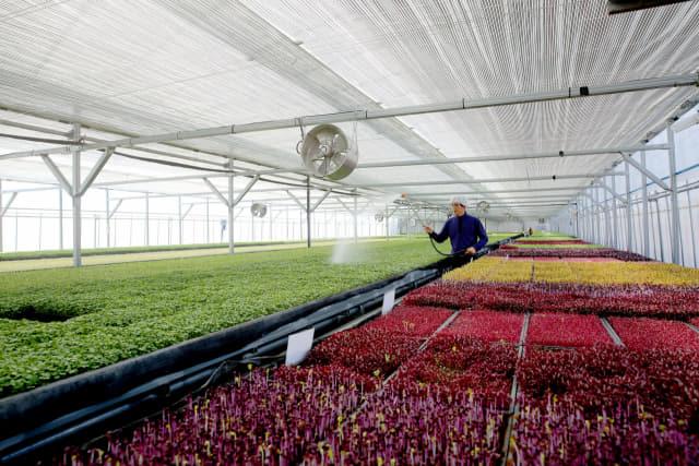 산청군 금서면 사회적기업인 신풍영농조합에서 새싹을 키우고 있다(제공=산청군)
