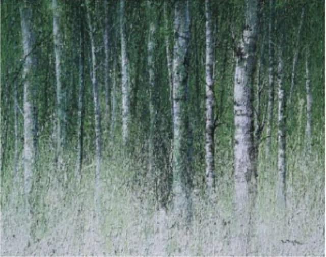 이정화 作 '자작나무 숲'