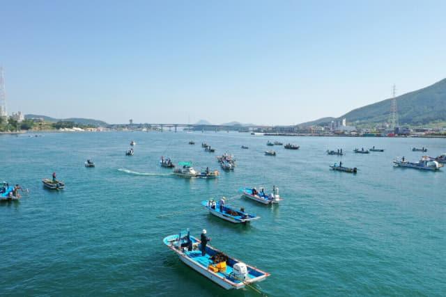 통영과 거제 사이에 있는 견내량 해협에서 수십 척의 어선들이 긴 장대 끝에 채취도구를 단 트릿대로 돌미역을 건져 올리는 진풍경을 연출하고 있다./통영시/
