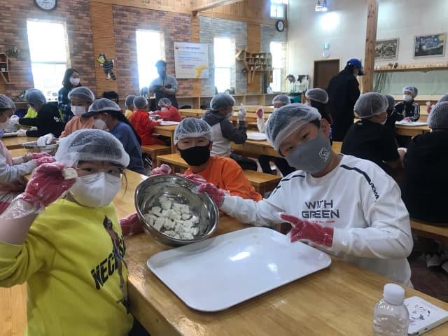 치즈만들기 체험을 하고 있는 학생들.