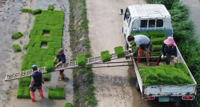 25일 오후 창원시 의창구 대산면 신동들녘에서 농민들이 모내기를 하기 위해 모판을 차량에 옮겨 싣고 있다./김승권 기자/