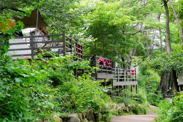 장척힐링영농조합이 숲을 활용한 마을 수익 사업으로 운영 중인 캠핑장.