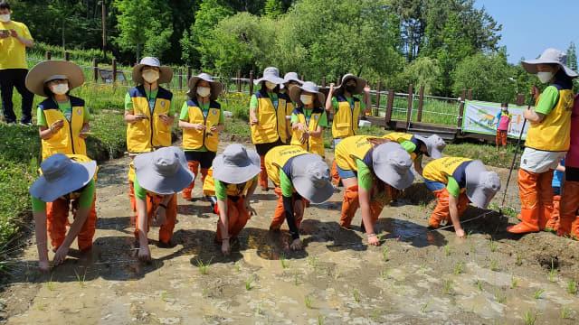 통영 벽방초등학교 기후천사단 학생들의 다랭이논 체험.