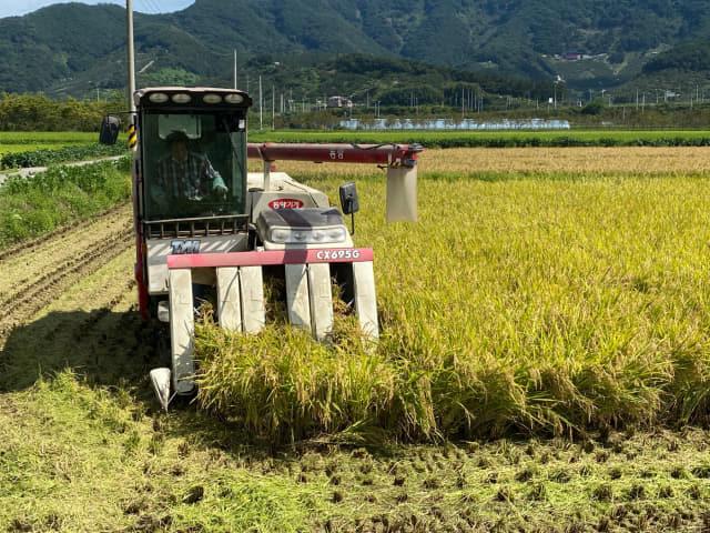 창원시 의창구 북면 신촌리 신리마을 들녘에서 지난 9일부터 햇벼 수확이 시작됐다. 이 벼는 밥맛이 좋은 기능성 신품종 '조명벼'로 추석용 햅쌀로 판매될 예정이다./창원시/
